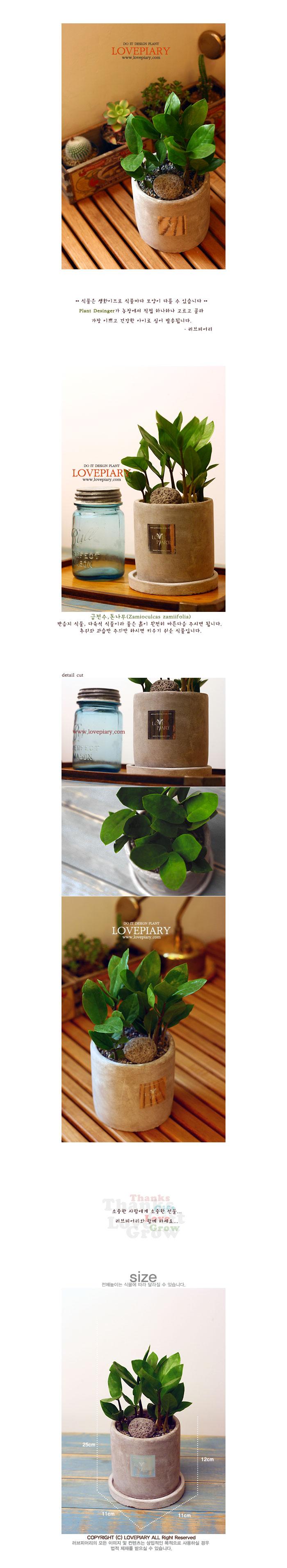 금전수 모던 원형화분 - 러브피어리, 17,900원, 허브/다육/선인장, 공기정화식물