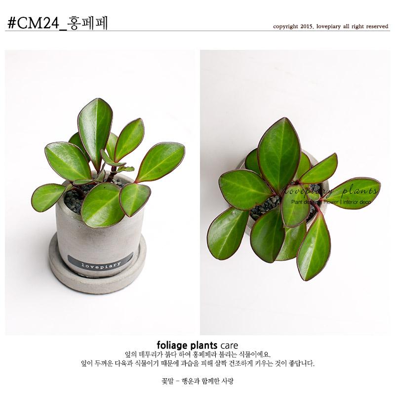 실내공기정화식물 미니시멘트화분 - 러브피어리, 7,900원, 허브/다육/선인장, 공기정화식물