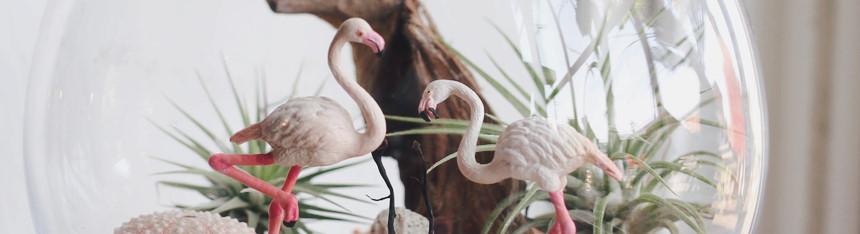플라밍고와 춤을 틸란드시아 테라리움 만들기(L) - 러브피어리, 44,500원, 공화분, 미니화분