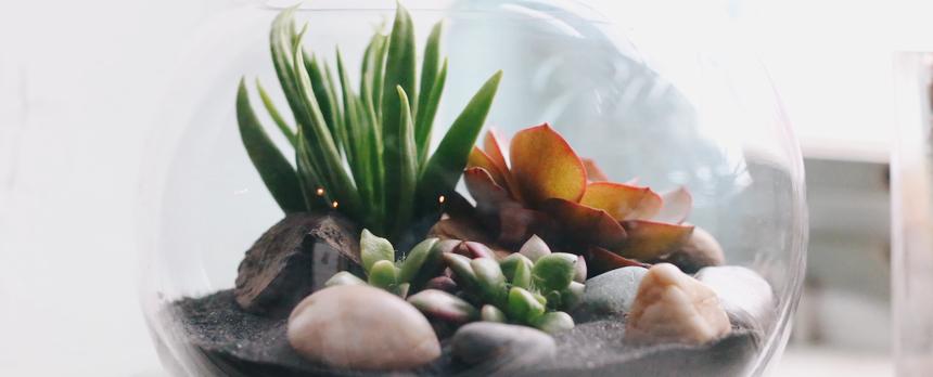 모듬 다육식물 테라리움 만들기 - 러브피어리, 17,500원, 허브/다육/선인장, 다육/선인장